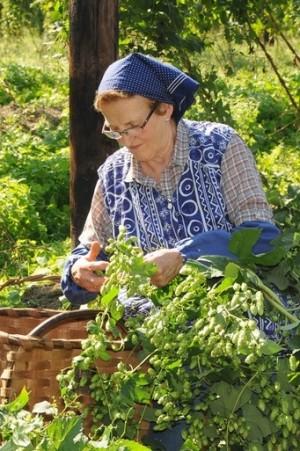 Hops Harvestsmsl